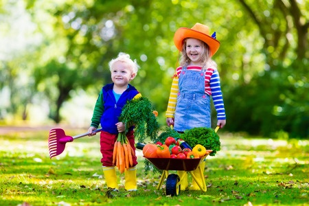 43360964 - children picking veggies on organic farm