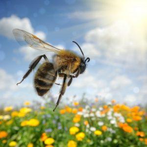 19791372 - bee flying