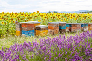 42655064 - bee hives
