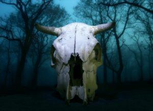 22606280 - cow skull