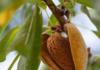 Capay Hills Organic Almonds