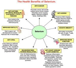 Health Benefits of Selenium