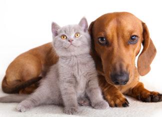 Raw Pets