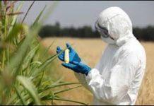 Organic Food vs. GMOs