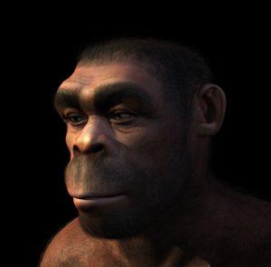16153812 - homo erectus