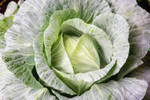 73347807 - fresh organic cabbage
